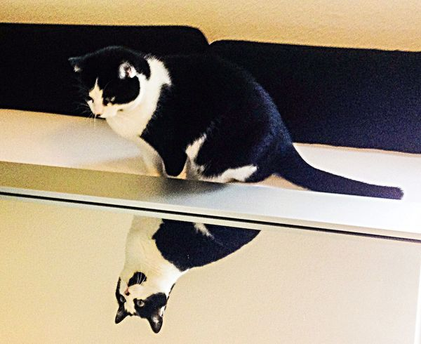 Mirror Through The Mirror Cat Cats Cat♡ Spieglein Spieglein An Der Wand.. Beauty