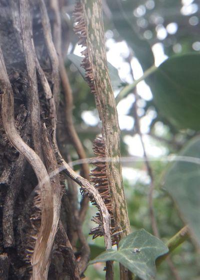Close Up Close Up (: