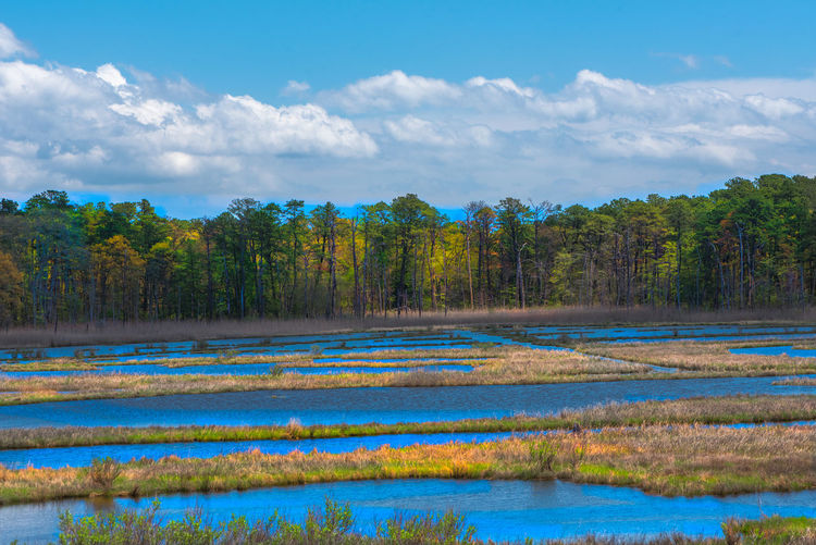 Salt Marshes laid out in a grid before a tree line on a sunny morning #evocativephotos Blue Sky White Clouds Pond Beauty In Nature Cloud - Sky Day Forest Growth Lake Landscape Marsh Natural Habitat Nature No People Outdoors Pristine Beauty Salt Marshes Scenics Sky Tranquil Scene Tranquility Tree Water