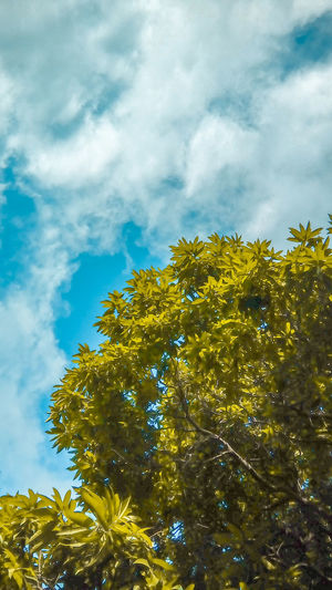 Tree❤️ #EyeEmNewHere #naturelove #Nature  #beautiful EyeEm Selects #photography #FollowMe #landscape #nature #photography #potrait #streetphotography Foodphotography Tree Sky Nature Cloud - Sky Low Angle View Outdoors Blue Day Beauty In Nature Mammal Close-up No People Multi Colored Yellow