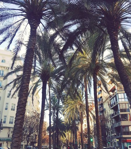 street SPAIN València Low Angle View Tree Day Growth Outdoors No People Nature