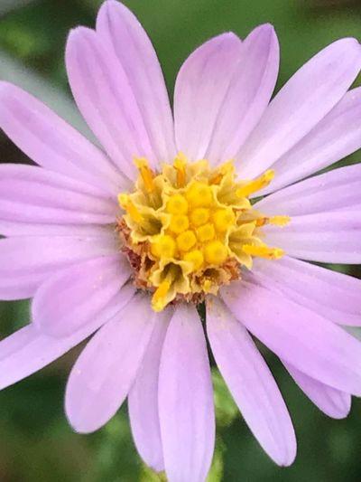 Flower Petal