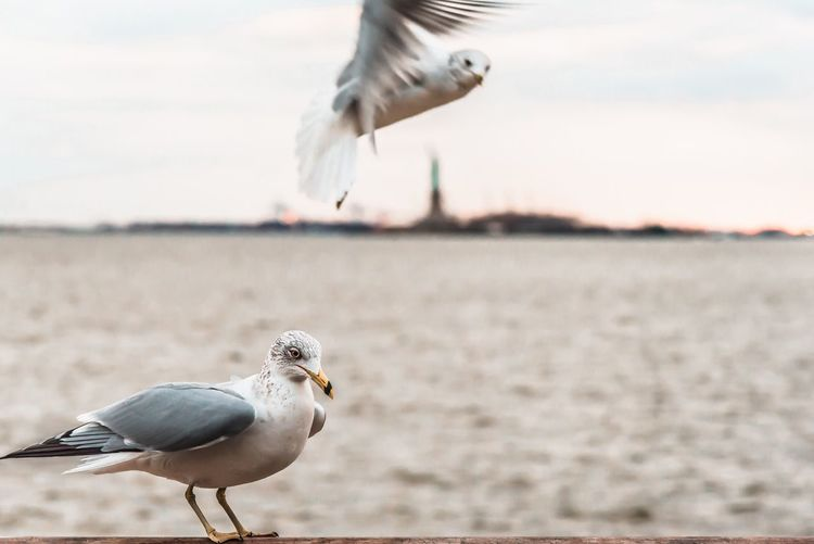 Close-Up Of Seagull By Sea