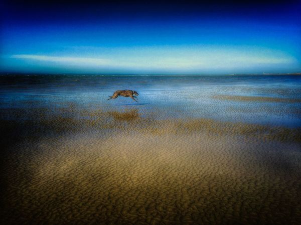LEO... The One Eyed Lurcher... Sighthound Lurcher I Love My Dog Hello World Taking Photos Live For The Story