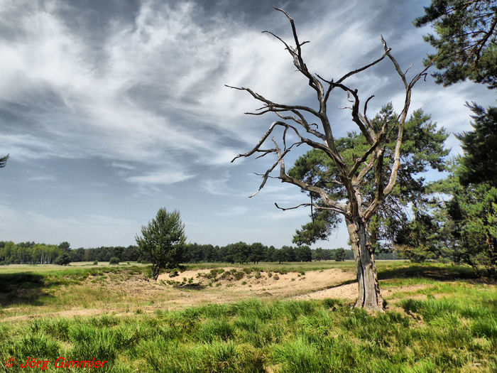 No People Outdoors Outdoor Photography Samsung Summertime Summer Old Tree Tree Rural Scene Agriculture Field Sky Grass Cloud - Sky Landscape Storm Cloud Bare Tree Single Tree