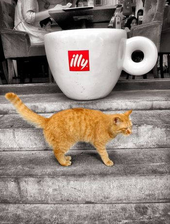 My Smartphone Life Cat Hutong Lama Temple IPhone6 Plus Cafe Latte Sumer
