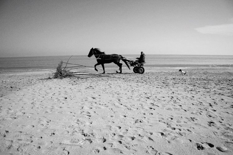 Horse Sea Sand Domestic Animals Beach Nature Horizon Over Water Horseback Riding Sky Outdoors Riding Day Dog Seaside Winter Sunny Day Hunter EyeEm Selects Pet Portraits