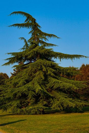 Tree Tranquil
