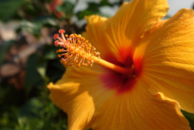Flower Nature Beauty In Nature Petal Flower Head Plant Freshness Yellow Close-up Fragility Pollen Growth Stamen Sunlight Springtime Outdoors Day No People Pistil Day Lily