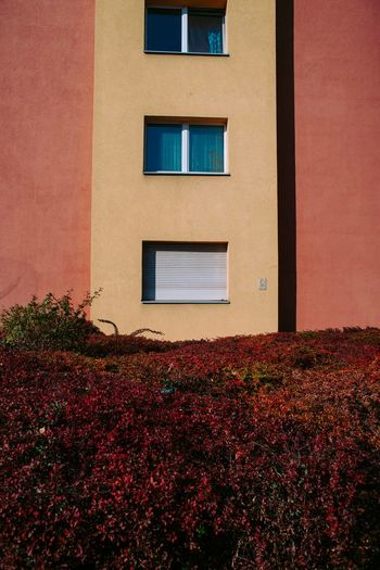 Life should be minimal Built Structure Architecture Building Exterior Window Building Plant No People Nature Outdoors Day Wall - Building Feature House Red Flower Autumn Flowering Plant Low Angle View Growth Residential District Wall Minimalism Photojournalism