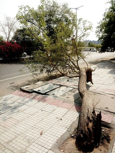 Broken Tree Sidewalk Discoveries Urban Nature