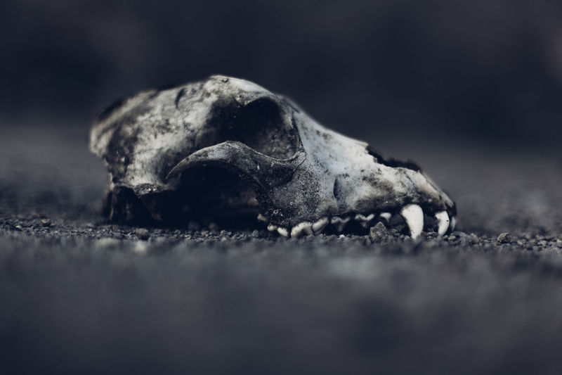 Animal Animal Body Part Animal Head  Beauty In Nature Bones Close-up Dark Day Dead Dead Animal Focus On Foreground Mammal Nature Nature No People Outdoors Selective Focus Skull Textured  Turtle First Eyeem Photo