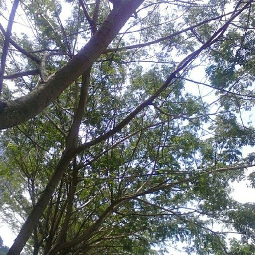 Trees.. WCBestRAW Nexianultra Jakarta @fotodroids Instagram android indonesia omof andrography indoinstanesia