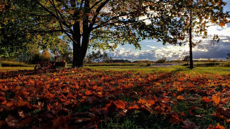 Scenic view of flowering trees on field during autumn