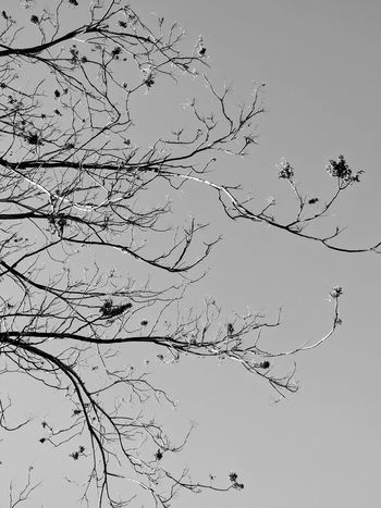 winter's branches in bnw Nature Beauty In Nature No Edit No Fun Eyem Gallery Outdoor Photography EyeEm Gallery Beauty In Nature Tree Branches Taking Photos EyeEm Nature Lover Tree And Sky Simple Beauty Edited My Way Bnw What I See Nature Eyeem Tree Let's Do It Chic! MiniBlack And White Photography EyeEm Bnw Being Artsy Fine Art Photography