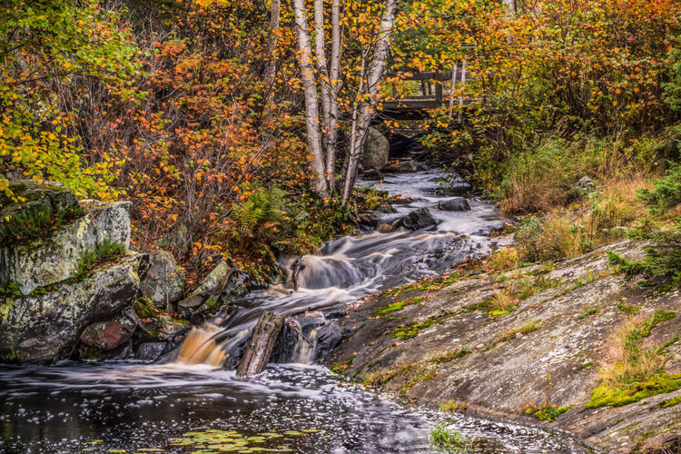 Stream flowing through rocks in forest during autumn