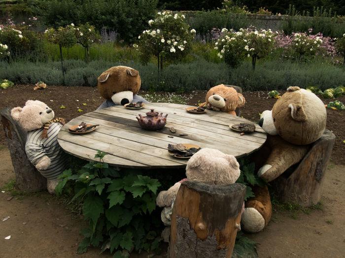 Bears Plush Tea