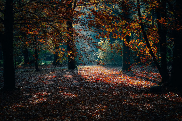 Sunlight falling on autumn trees in forest
