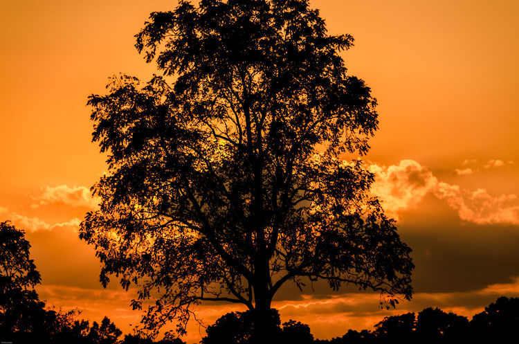 Fire in the sky Sunset Silhouette Scenics Beauty In Nature Tranquility Tranquil Scene Sky Orange Color Non-urban Scene Back Lit Single Tree Outdoors Nikon D7000 Nikon Life Nikon Photography Ontario, Canada Canada Coast To Coast Rural Scene Tranquility Field Nature Cloud Porn London Ontario Outdoor Photography