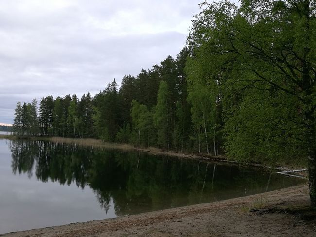 No People Pinaceae Cloud - Sky Sky Forest Lake Water Outdoors Nature Tree Day Beauty In Nature Finlande Finland Savonlinna Finland Savonlinna Finland Finlandia Punkaharju Finland Finland♥ Finlandlovers Finlande Finlandiaa Finland's Clean Nature Finland Summer Finland <3 Finland :)