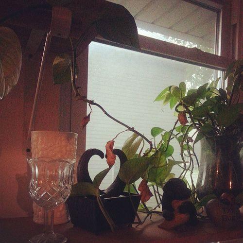Tourofmoms plants vases & love everywhere. Feelslikehometome