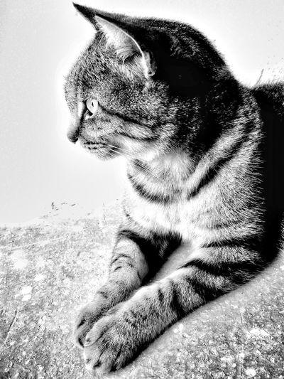 a cat's profile