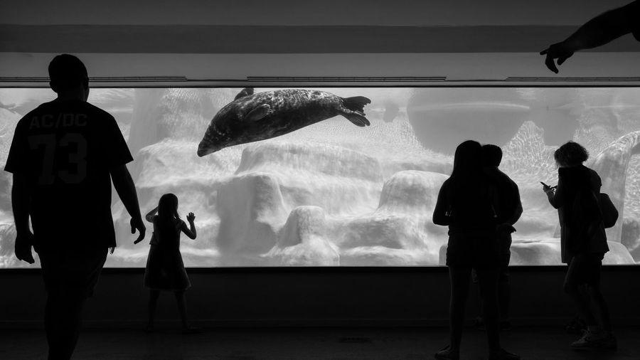 Panoramic shot of people against aquarium