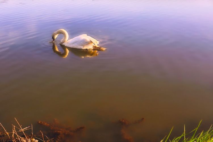 Close-up of duck floating in sea