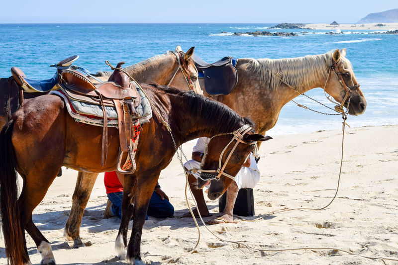 Beach Horses Los Cabos Los Cabos San Lucas Ocean View Paradise Romantic Sea Side Ride Tourist