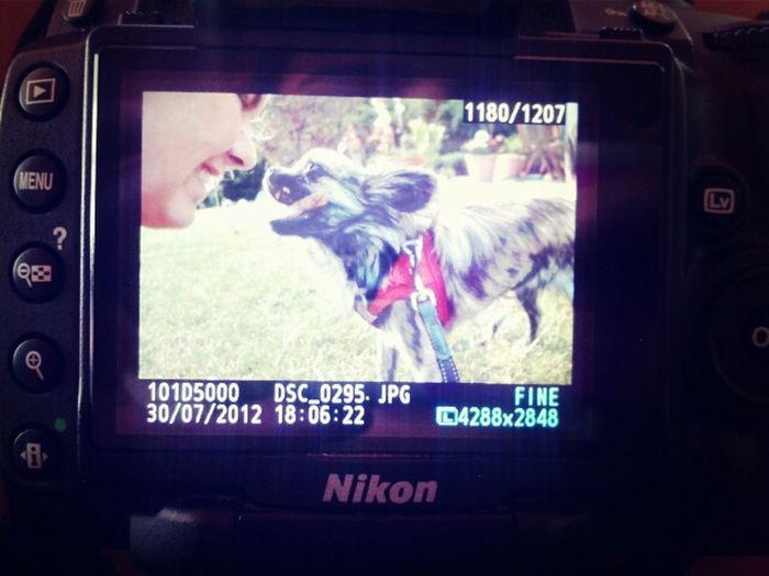 Taking Photos Littledog Chihuha
