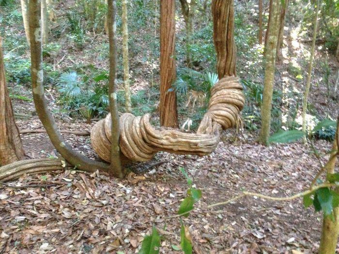 twisted vine TreePorn
