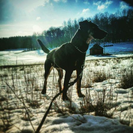 Enjoying Life German Hunting Terrier Sweden Dogs Belowzero Snow ❄ Winter Theplacetobe  Hunting