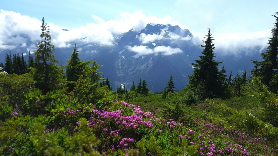Beautiful day! Hiking Mountain View Mountains Mountains And Sky Clouds Wildflowers Outdoor Photography Nature Photography Naturelovers Scenic View Scenery Landscape_Collection Landscape Green Grass Clouds And Sky Beauty In Nature Rugged Beauty Rugged Terrain Pacific Northwest  Purple Flowers Trees Summer Exploring