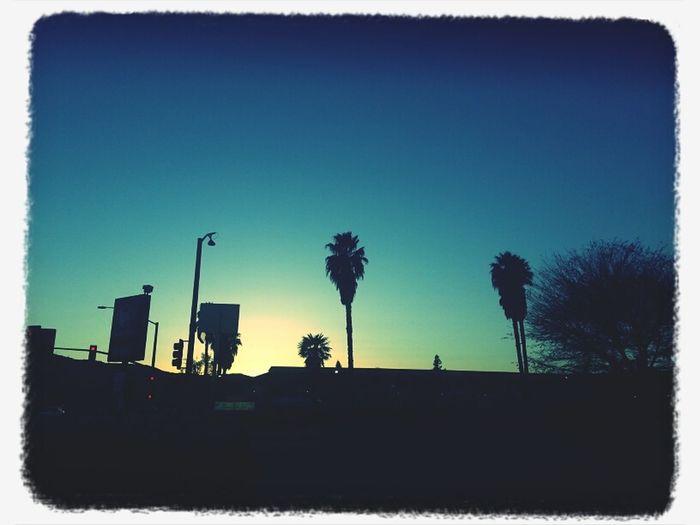 Sunday California Love Palmtree