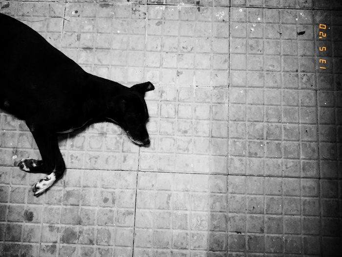Black dog standing against brick wall