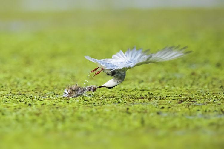 《雏鸟遭虐》鸟爸鸟妈外出,一只雏
