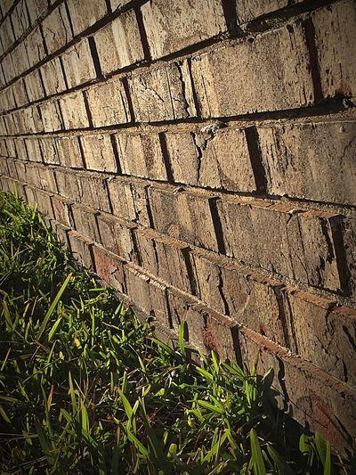 Red Brick Wall Mild Green Thick Grass Holes Sunshine Sunny Huế Orange Yellow Afternoon Shadow