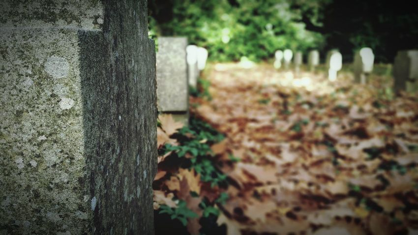 """""""Graves"""" - Outdoors Day Nature Focus On Foreground Close-up October Gravestone Omegatainment No People Autumn Selective Focus Herbst Graveyard Peaceful Golden October Halloween Leaf Herbstblätter Stone Material Fallen Leafes Sunlight Backgrounds Halloween Decorations"""
