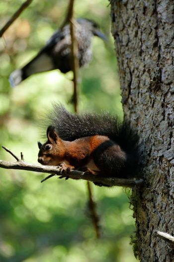 Close-up of a squirrel on tree trunk