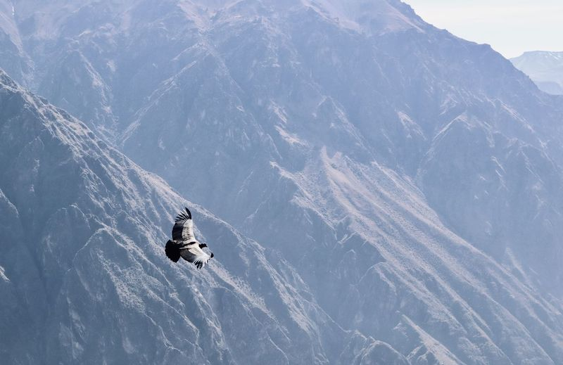 View of bird flying against mountain range
