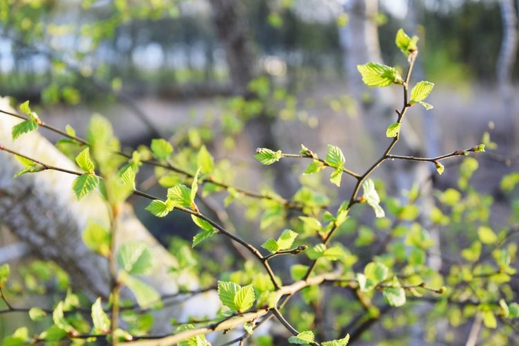 Nature Leaf Growth Plant Green Color Outdoors Tree No People Close-up Social Issues Beauty In Nature Freshness Climate Change Polution Air Pollution Nature Fossil Fuel Plants