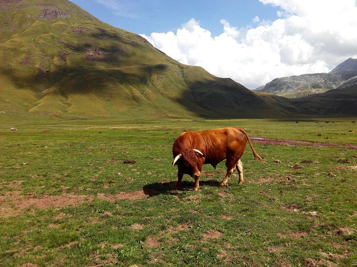 Bull Standing On Grassy Field By Mountain Against Cloudy Sky