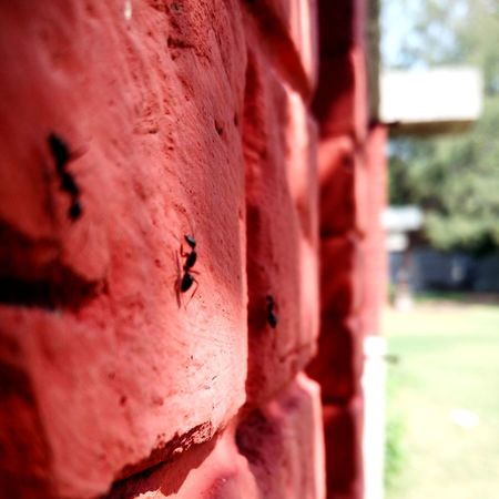 Raw and Working. Bare Brick Work Ant Red Brick Wall Onward