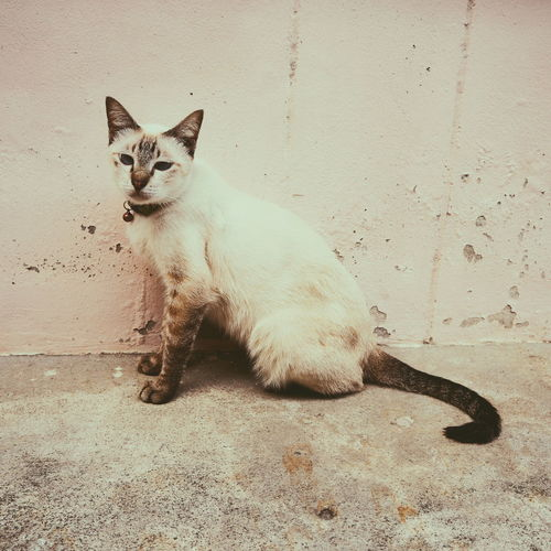 Portrait of cat sitting on wall