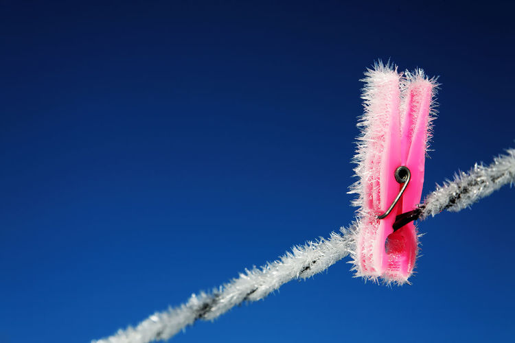 Low angle view of frosty clothespin on rope against blue sky