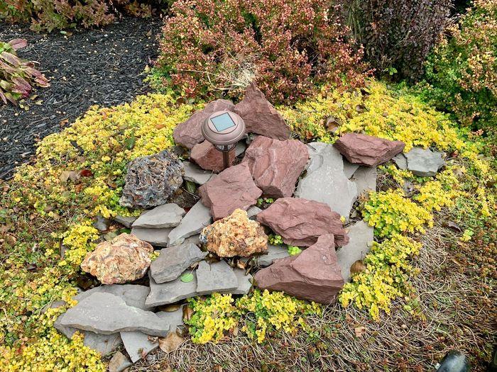 Fall foliage &