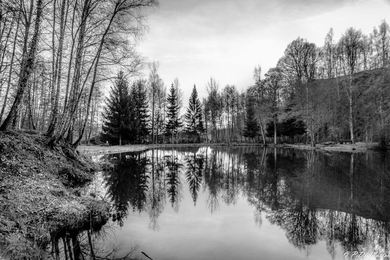 Reflection Nature Water Lake Beauty In Nature Tranquility No People Reflection Lake Forest Tranquil Scene Blackandwhite
