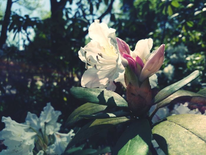 Clearness Flower