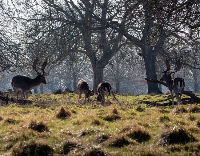 Deer Outdoors Nature Animal Themes Mammal Animal Wildlife No People Animal Group Of Animals Forest Herbivorous Standing