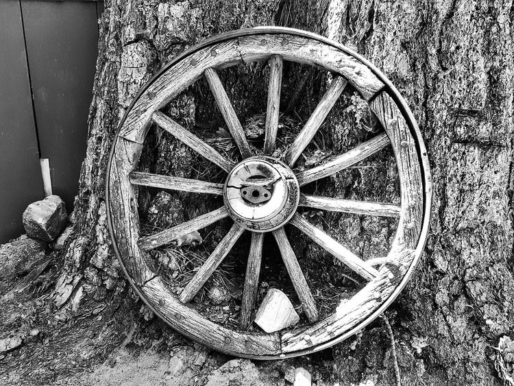 Wagon Wheel Finds A New Home Relic Rustic Wagon Wheel Old Fashion Wooden Wagon Wheels Wooden Wheel Fine Art Outdoors Nature Trees Wilderness Forests From My Point Of View EyeEm Black And White Eye4photography  Photography Is My Therapy Perspective Black & White ForTheLoveOfPhotography Wagonwheel Eyeemphotography Blackandwhite Photography